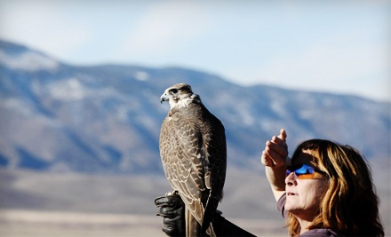 West Coast Falconry: 45-Minute Introduction to Falconry Lesson - West Coast Falconry in Marysville