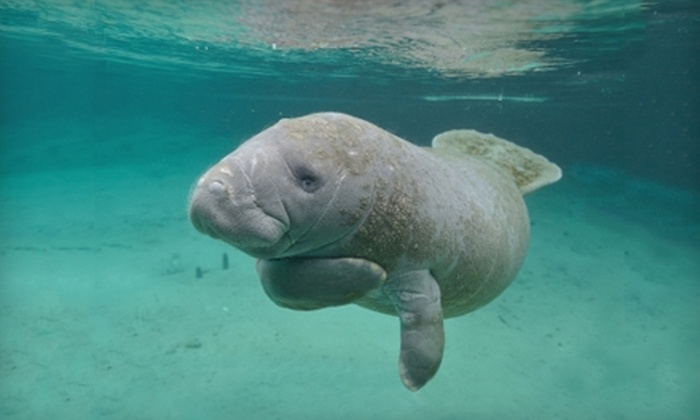 Manatee Adventure - Multiple Locations: $22 for Manatee Tour and Swim with Florida Manatee Adventure ($45 Value)