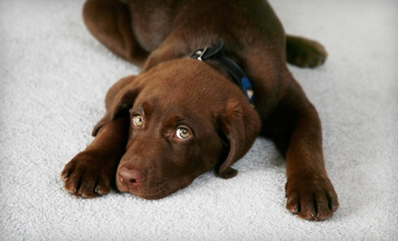 2-Room Carpet Cleaning (a $184 value) - Coit Carpet Cleaning Buffalo in