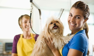 Pet Addict: Online Dog and Cat Grooming Course for £19 with Pet Addict (94% Off)