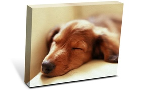 Katfam Photo: Gallery-Wrap Custom Canvas Print at Katfam Photo (Up to 88% Off). Four Sizes Available.