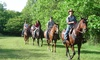 Forest View Farms - Tinley Park: One-Hour Private Horseback Trail Ride for Two, Four, or Six at Forest View Farms (Up to 53% Off)