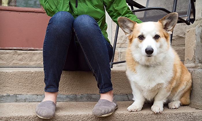 My Confident Canine - Ann Arbor: $129 for Five At-Home Dog-Training Sessions from My Confident Canine ($400 Value)