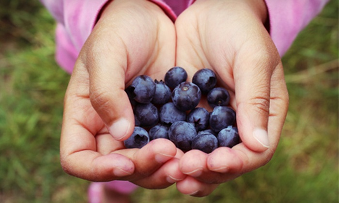 VanderHelm Farms - Waterford: $10 for $20 Worth of Pick-Your-Own Blueberries at VanderHelm Farms