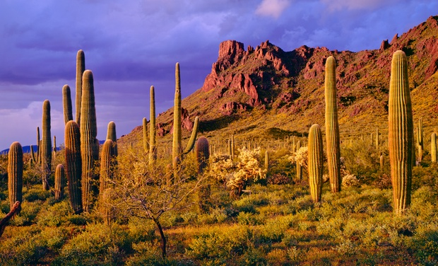 Newly Remodeled Hotel - Phoenix, AZ: Stay with Dining Credit at Newly Remodeled Hotel in Phoenix. Dates into September.