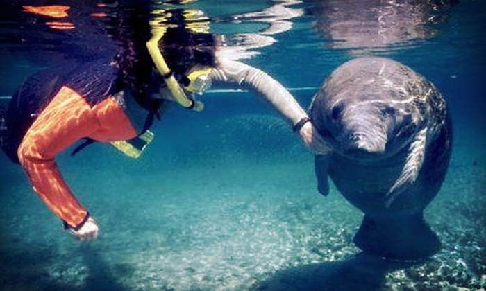 Native Vacations - Crystal River: $29 for a Manatee Snorkeling Tour from Native Vacations in Crystal River ($60 Value)