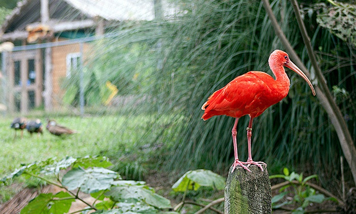 Sylvan Heights Bird Park - Taylor Estates: Sylvan Heights Bird Park Visit for Two or Four (Up to 50% Off)