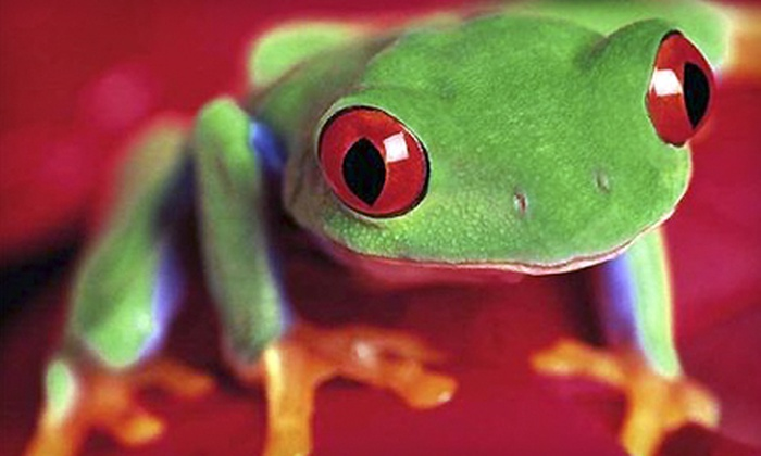 Reptilepartywny - Buffalo: $119 for Birthday Party with Reptiles for Up to 15 Guests from Reptilepartywny ($250 Value)