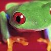 52% Off Children's Reptile Party