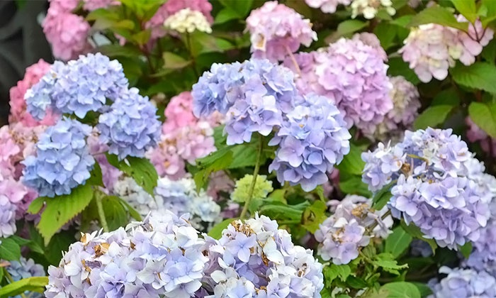 English Gardens - Multiple Locations: $13 for $25 Worth of Plants, Flowers, and Gardening Supplies at English Gardens