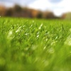 61% Off Lawn Care from Top Notch Turf