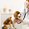 46% Off Veterinary Services