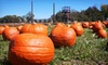 S and H camp ground - Buck Creek: Seasonal Games Package for Two or Four with Paintball, Corn Maze, and Mini Golf at S&H Campground (Up to 57% Off)