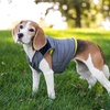 Eddie Bauer Active Coat for Dogs