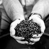 Half Off Fair-Trade Coffee from Aspire CoffeeWorks