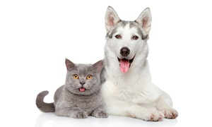 Hialeah Animal Clinic: Wellness Exam or Annual Checkup with Vaccines for Dog or Cat at Hialeah Animal Clinic (78% Off)