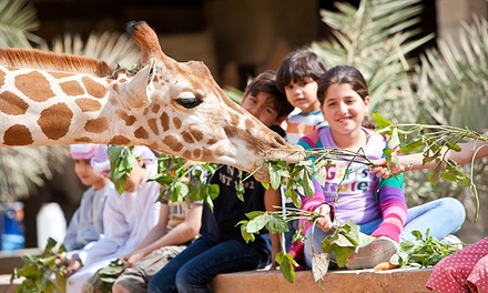 Abu Dhabi: 1 or 2 Nights for Up to Six with Zoo Entry Tickets at Emirates Park Resort