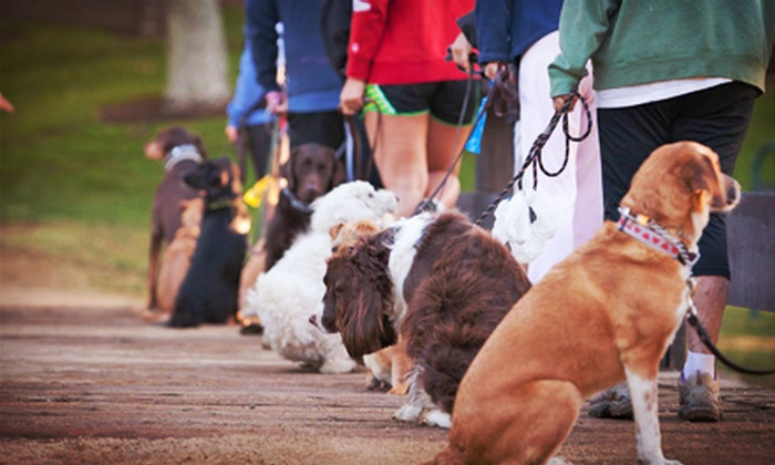 Thank Dog! Bootcamp - Asheville: Introductory Dog Obedience Lesson with 4, 8, or 12 Bootcamp Classes at Thank Dog! Bootcamp (Up to 81% Off)
