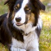 Up to 71% Off Dog Daycare or Boarding