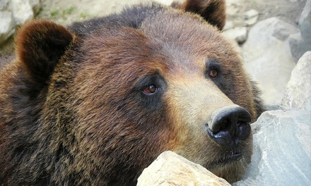 $45 for a Family or Grandparent Membership to Big Bear Alpine Zoo ($75 Value)