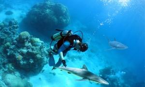 Aquadomia: 1 formation de plongée 1er niveau scuba diver PE12 pour 1 personne à 199,99 € avec Aquadomia