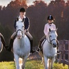 Up to 53% Off Horseback Riding in Corcoran
