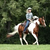 53% Off One 30-Minute Western Riding Lesson
