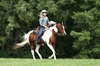 Summit Farm - North Salem: $47 for One 30-Minute Western Riding Lesson ($100 Value) — Summit Farm