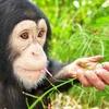 51% Off at Suncoast Primate Sanctuary
