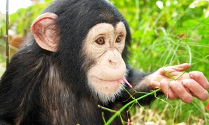 Suncoast Primate Sanctuary: Monkey-Feeding Experience for Four at Suncoast Primate Sanctuary (51% Off)