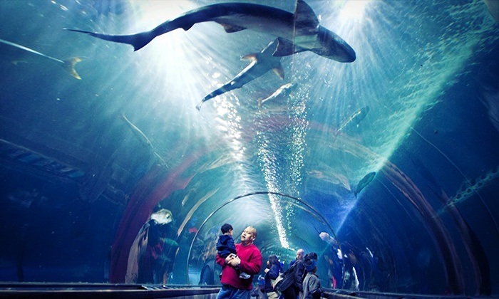 Aquarium of the Bay - Fisherman's Wharf, North Beach/Telegraph Hill: Day at the Aquarium of the Bay for One Adult, One Child, or One Family of Four (Up to 41% Off)