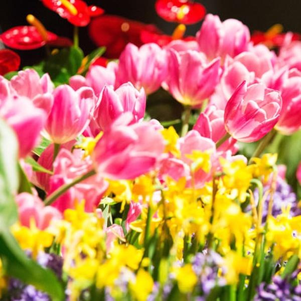Chicago Flower Garden Show Chicago Flower Garden Show Groupon