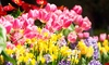 Chicago Flower & Garden Show presented by Mariano's - Chicago Flower & Garden Show: Chicago Flower & Garden Show for Two or Four at Navy Pier (Up to 49% Off)