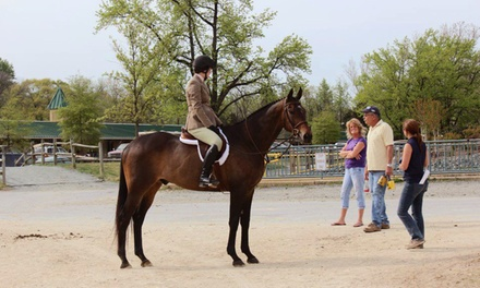 $49 for a 90-Minute Introductory Group Horseback-Riding Lesson at Loftmar Stables ($100 Value)