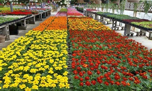 Banotai Greenhouse: Flowers and Plants at Banotai Greenhouse (50% Off). Two Options Available.
