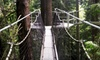 UBC Botanical Garden - University Endowment Lands: Admission to the Greenheart Canopy Walkway for One Person or a Family at UBC Botanical Garden (Up to 52% Off)