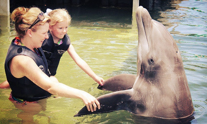 Dolphin Cove - Key Largo: $95 for a Shallow-Water Dolphin Encounter at Dolphin Cove ($155 Value)
