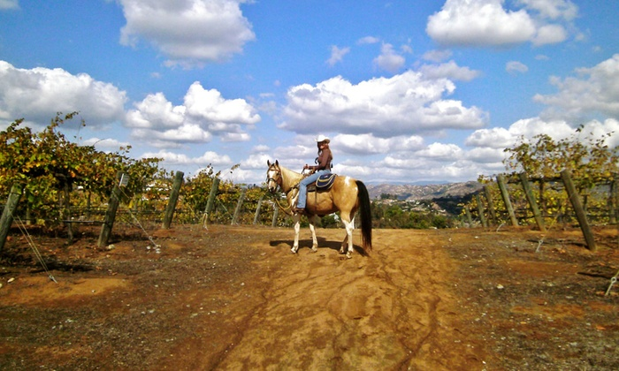 Vineyard Trail Rides - Milagro Farm Vineyard and Winery: $119 for 90-Minute Horseback Ride for Two from Vineyard Trail Rides ($280Value)