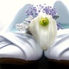 Up to 65% Off Wedding Photography in Grande Prairie