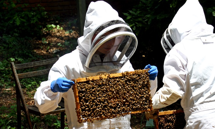 Guided Beekeeping Experience - Atlanta: Explore a Beehive and Taste Its Honey with a Master Beekeeper