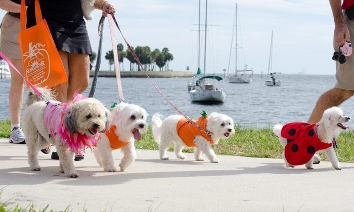 SPCA Tampa Bay - Vinoy Park: Up to 42% Off Pet Walk and Cat Video Festival at Vinoy Park with SPCA Tampa Bay