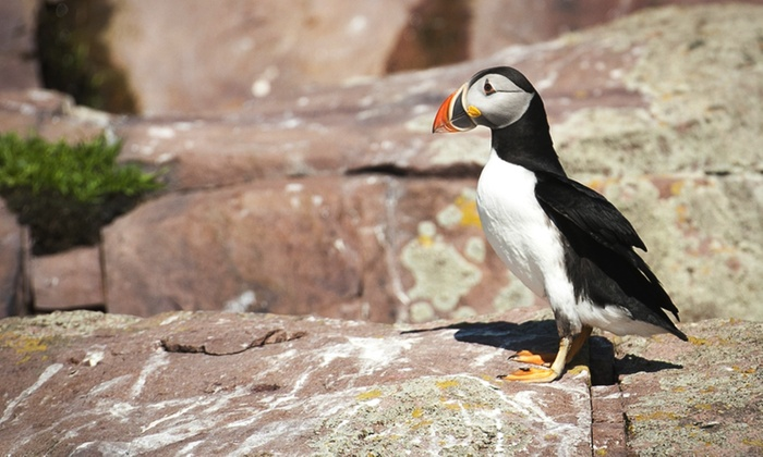 Mullowney's Boat Tours - Bay Bulls: C$110 for a Two Hour Puffin- and Whale-Watching Tour for Four from Mullowney's Boat Tours (C$220 Value)