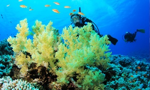 Big Blue Divers Rome: Corso di sub Padi Discover Scuba Diving da 29,90 €. Valido in 3 sedi