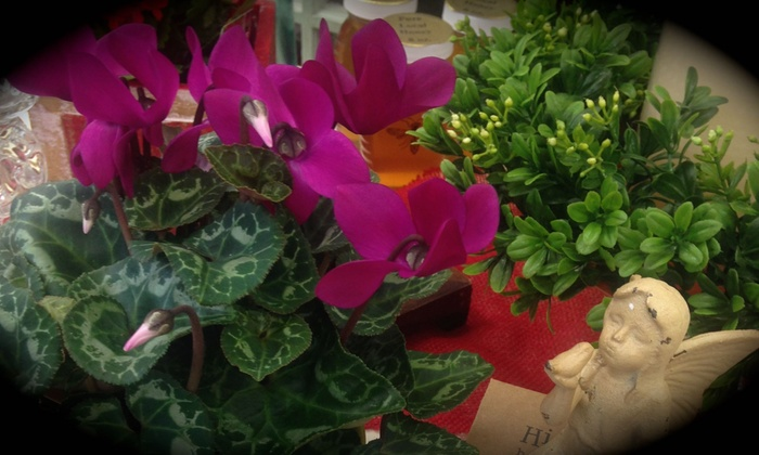 Tattered Leaf Designs flowers & gifts - Milwaukee: $27 for $60 Worth of Plants — Tattered Leaf Designs flowers & gifts