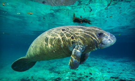 One 3 hour manatee snorkling tour with full gear