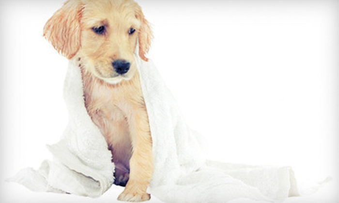 Let's Go! Pet Care - Colonial Place/Riverview: Self-Serve or Full-Service Dog-Wash Package with Nail Trim at Let's Go! Pet Care in Norfolk (Up to 65% Off)