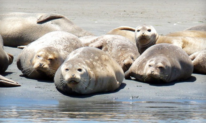 Blue Water Ventures - Moss Landing: $30 for a Guided Seals and Sea-Otter Watch Kayak Tour of Elkhorn Slough from Blue Water Ventures (Up to $60 Value)
