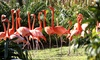 Jungle Island - Jungle Island: Safari Park Outing for Two Adults and Two Kids, One Adult, or One Kid at Jungle Island (Up to 54% Off)