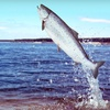 Up to 60% Off Salmon-Fishing Trips