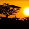 All-Inclusive Kenyan Safari from Odyssey Safaris